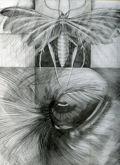 Gina Freuen, Right Eye 2009, graphite on clay baord