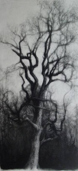 Elaine Green, Single 2009, charcoal on paper