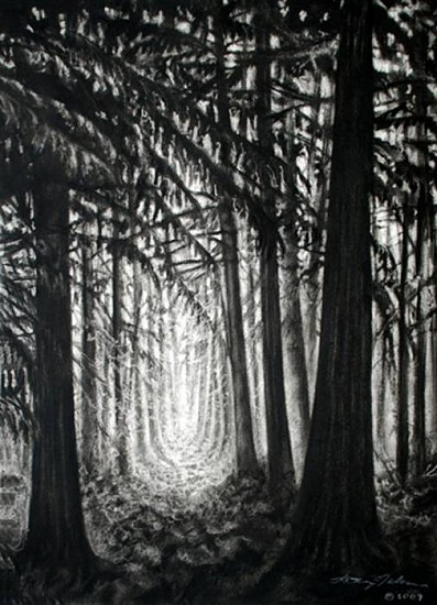 Katherine Nelson, Tall Trees 2009, charcoal on paper