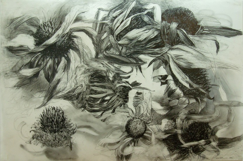 Mary Farrell, Icarus Descending 2005, pencil on paper