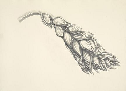 Katherine Nelson, Club Wheat 2018, graphite on paper